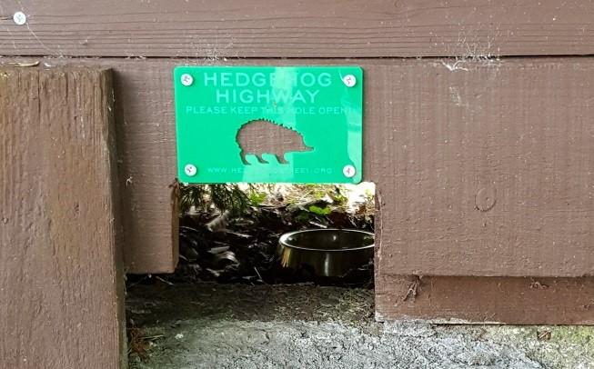 HedgehogCampaign2
